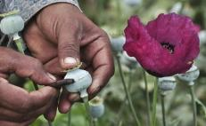Expert opinion divided over poppy regulation