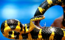 Snake venom: The key to cardiovascular health?
