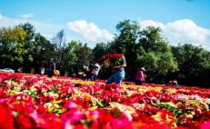Mexico breaks Guinness record with poinsettias