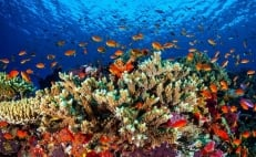Mexican scientist create robot to protect coral reefs