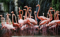 Mexican scientist uses drones to protect flamingos