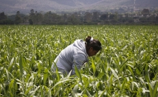 Only 26% of communal landowners in Mexico are women