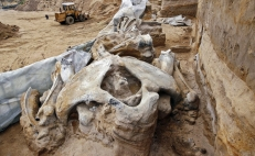 Archeologists find more mammoth fossils in Mexico