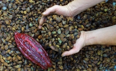 Mexico declares September 2nd as National Cacao and Chocolate Day