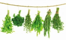 The 5 essential herbs in Mexican cuisine