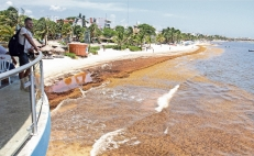 Sargassum plague invades Mexican caribbean again
