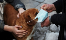 How to protect your pets from the environmental crisis in Mexico City