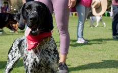 Spend a fun-filled day with your dog at an ecological park