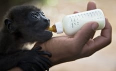 Mexico's new oil refinery threatens 4,000 animals