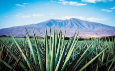 Tequila and mezcal threatened by new U.S. category Agave Spirits