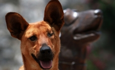 The rescue dog protecting Mexico from rare diseases and plagues
