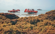 Mexico to pick up sargassum on the high seas