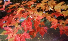 What is the fall equinox?