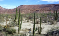 Visit Mexico's most striking cacti sanctuary
