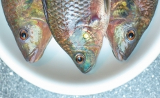 Climate change will endanger seafood in Mexico