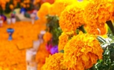 Flower Festival in downtown Mexico City