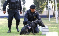 Police dogs, four-legged protectors of peace and security