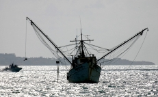 The rise of illegal fishing, a threat of austerity in Mexico