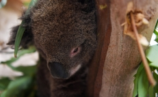 Australia fires: Countless species on the verge of extinction