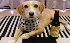 Mexican beer raises funds for stray dogs