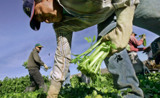 Chef Enrique Olvera launches a crowdfunding campaign to help Mexican migrants in the U.S.