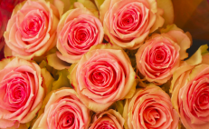 Get these beautiful bouquets delivered to your mom on Mother's Day 2020