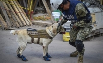Rescue dogs, four-legged heroes