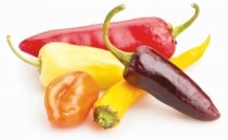 Molecule found in chili could cure obesity