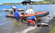 Mauritius marine life threatened after a stranded Japanese oil tanker splits apart