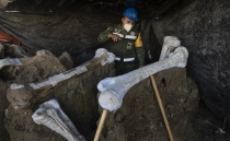 World's largest mammoth central found in Mexico's new airport could solve the riddle to their extinction