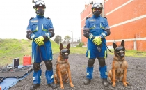 Ecko and Evil, the Mexican four-legged heroes keeping beloved rescue dog Frida's legacy alive