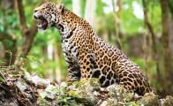Mayan Train a threat to the Yucatán peninsula ecosystem
