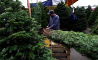Natural vs. artificial Christmas trees: Which one is better?