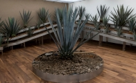 Tequila Museum opens in Mexico City