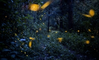3 places to see fireflies near Mexico City