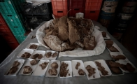 Mexican archeologists find mammoth fossils in Jalisco