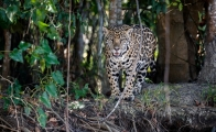 Nature flourishes throughout Mexico during the coronavirus lockdown