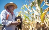 Mexico to achieve food security in less than 15 years