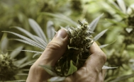 Mexico sees great potential in cannabis industry