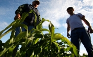 Mexican government creates Food Security Agency