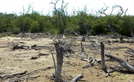 Contractor sued for mangrove destruction in Mexico