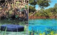 Mangroves, essential to fight climate change