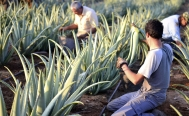 UNAM promotes rural businesses with online education project
