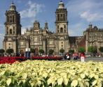 Poinsettias invade Mexico City