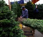 Natural vs. artificial Christmas tree: Which one is better?