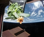 Mexican scientist presents project to grow plants in space for NASA