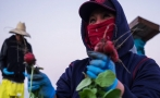 Female farm workers in the U.S. and the hell they endure