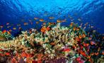 Mysterious disease threatens Mexico's coral reefs