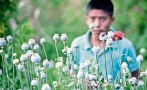 Mexico seeks to tackle heroin trade at its roots
