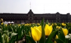 Mexico celebrates Valentine's Day with heart-shaped flower beds